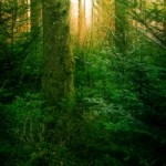 1384644_sunlight_in_deep_green_forest